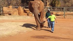 de paseo con una elefante